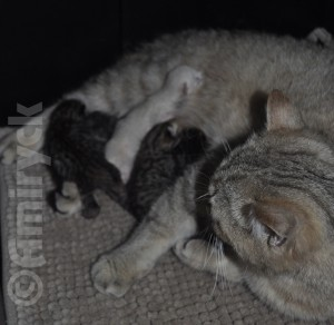 Kizzy with her newborn kittens