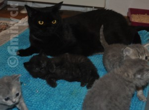 Opal with her kittens
